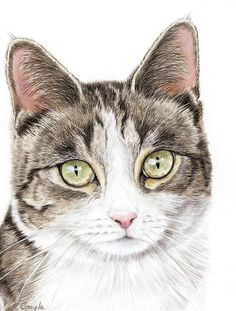 Domestic Animals Free tutorial with pictures on how to draw paint a piece of animal art in under 60 minutes Animal Paintings, Animal Drawings, Horse Drawings, Pencil Drawings, Cat Sketch, Watercolor Cat, Cat Colors, Color Pencil Art, Pictures To Draw