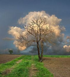 Leafless tree with background clouds