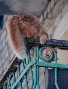 """Damn! That bird saw me!"" Via mostlycatsmostly | via ivolka"