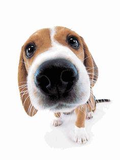 """https://www.facebook.com/GifsMensagens/ """"Amor é quando seu cachorro lambe sua cara, mesmo depois que você deixa ele sozinho o dia inteiro."""""""