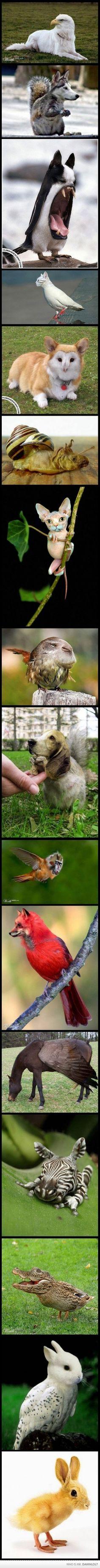 #mademyday #hahaha #animalbodieswithwronghead