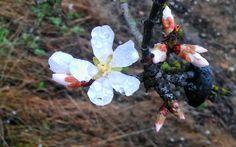 Flores en la rioja