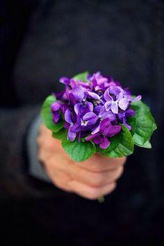 A nosegay of violets