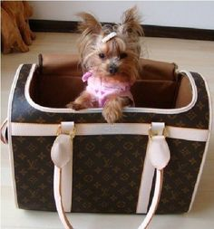 adorable yorkie, love the LV pet carrier