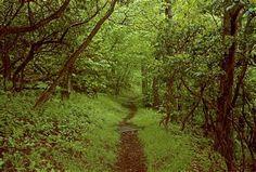 Appalachian_Trail_at_Newfound_Gap