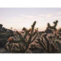 """""""Desert sunsets"""" Photo taken by @andrewjasonleung on Instagram, pinned via the InstaPin iOS App! http://www.instapinapp.com (06/25/2015)"""
