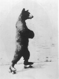 #BEAR   #ROLLER-SKATES