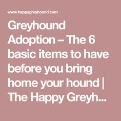 Greyhound Adoption – The 6 basic items to have before you bring home your hound | The Happy Greyhound