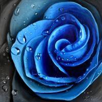Modra ruze