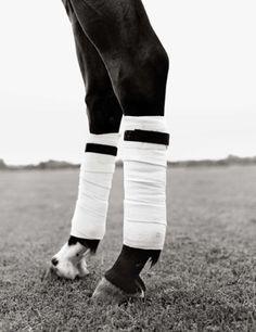 polo wraps... Richard Phibbs equestrian photography.