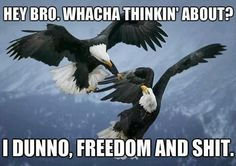Freedom and shit