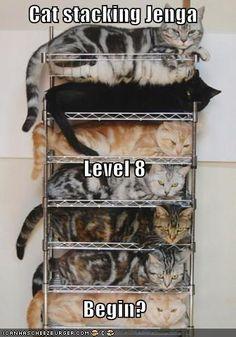 cat stacking jenga