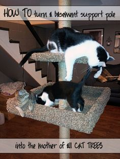 How to Build a Cat Tree Around a Basement Support Pole - screwed on straight Basement Cat, Basement Ideas, Crazy Cat Lady, Crazy Cats, Diy Cat Tree, Cat Trees, Cardboard Cat House, Super Cat, Cat Room