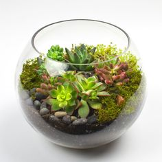DIY terrarium kits that feature juicy, drought-tolerant succulents. All our kits include everything you need to create a DIY succulent terrarium, including the