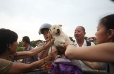 CNN witnesses Chinese activists trying to rescue dogs from butchers. Graphic video: http://cnn.it/1nXpObB pic.twitter.com/rrrqr9Tsdv