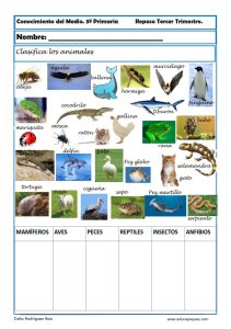 Conocimiento del medio primaria: clasifica animales.