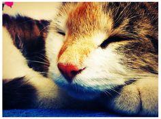 Sleeping cat Wildlife, Fox, Sleep, Cats, Wilderness, Animals, Vintage, Gatos, Animales