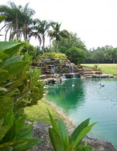 View of man made pond and waterfall by Miami based landscape architect Orlando Comaslicensed by State of Florida.