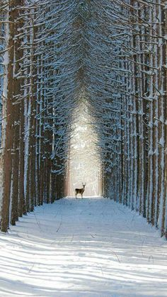 Our Beautiful World — plasmatics-life: Sanctuaire Winter Szenen, Winter Magic, Winter White, Winter Walk, Trees In Winter, Snowy Trees, Beautiful World, Beautiful Places, Beautiful Pictures