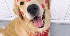 #pets Pets - Dicas, Cursos e E-books: #pet #pets #petfotos #petpics #fotosdepets #meupet #filhotes #petshop #franquiapetshop… #petspics