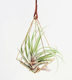 Himmeli Teardrop Air Plant Ornament by Handmade SamMade on Scoutmob Shoppe