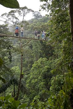Arenal Hanging Bridge, Costa Rica, Central America