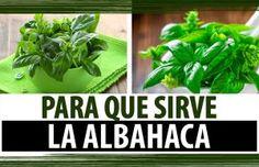 Esta planta es un antioxidante que ayudará a limpiar las arterias y regulará tu colesterol