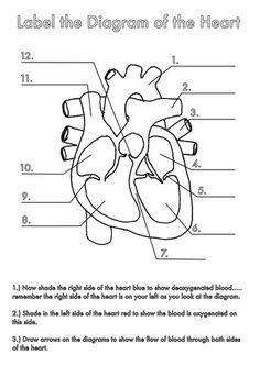 unlabelled heart diagram for children | Heart diagram ...