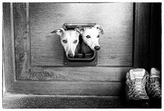 Cat Flap? by Hot Dog Photography, via 500px