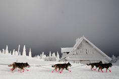 Dog Sled Race, Czech Republic.