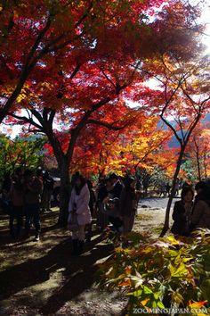 Beautiful autumn colors in Arashiyama's Tenryuji Temple (Kyoto, November 2012).