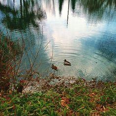 Elegant Pond u Ducks