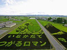 Better than crop circles... Japanese Rice Field Art