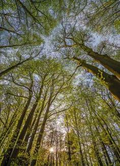 Canopy -NATIONAL GEOGRAPHIC Photo Wallpaper Wall Mural | eBay