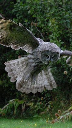 1080x1920 Wallpaper owl, bird, flight, wings, flap, predator