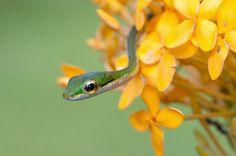 Culebra - Costa Rica / por Luciano  Gallo en 500px