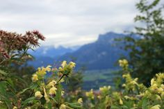 View from Gaisberg to Untersberg, Salzburg