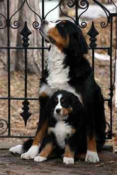 Mamma and pup.  Can I have them both? :)