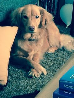 Jumping on the golden bandwagon! My baby girl looking regal. #Cute
