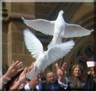 Liberare le colombe - MMV Musica matrimonio verona lago di garda wedding planner hochzeitsmusikgardasee wedding in verona