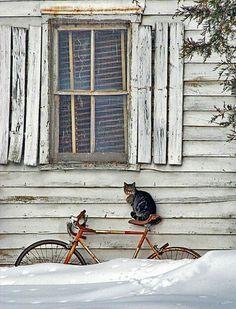 http://2.bp.blogspot.com/-QZ5KSQh8Kqg/Tsz19Q5cMhI/AAAAAAAAA3Q/gdsBH8alllE/s1600/snow.jpg