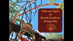 Take on Tigris at Busch Gardens Tampa Bay
