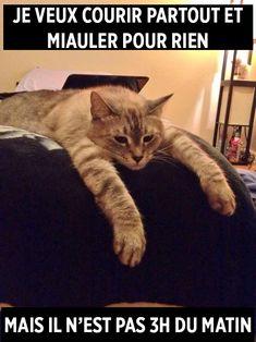 15 problèmes de chats déchirants, mais hilarants qui vous feront sourire | ipnoze