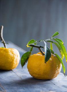 Creamy Yuzu Lime Sherbet Recipe on @whiteonrice