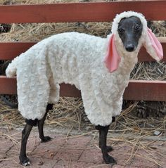 Hahahhahaa!!  This reminds me of Bullitt.  He would look so cute and pathetic in this..  XD   - Woof In Sheep's Clothing Dog Costume