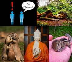 Happy is Harmlessness!  May all beings become thus Happy :-) http://What-Buddha-Said.net/drops/IV/May_all_be_Happy.htm
