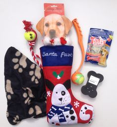 Dogs filled Christmas stocking from www.filledchristmasstocking.co.uk