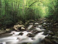 Canopy over Big Creek, Great Smoky Mountains National Park, North Carolina, USA Stretched Canvas Print by Adam Jones at Art.com