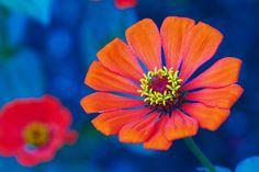 Flower on Blue by Luděk Wellart