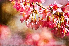 Spring Dreams by jamiestarling, via Flickr